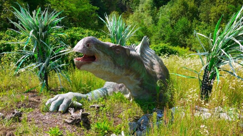iguanodon_samice-800