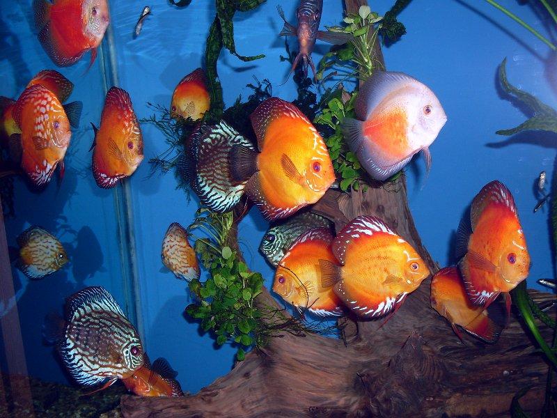 obri_akvaria_0091-2