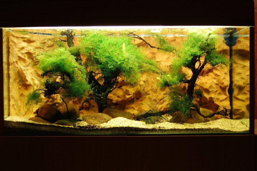 obri_akvaria_0110-2