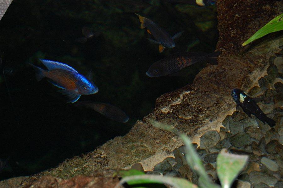 obri_akvaria_0115-2