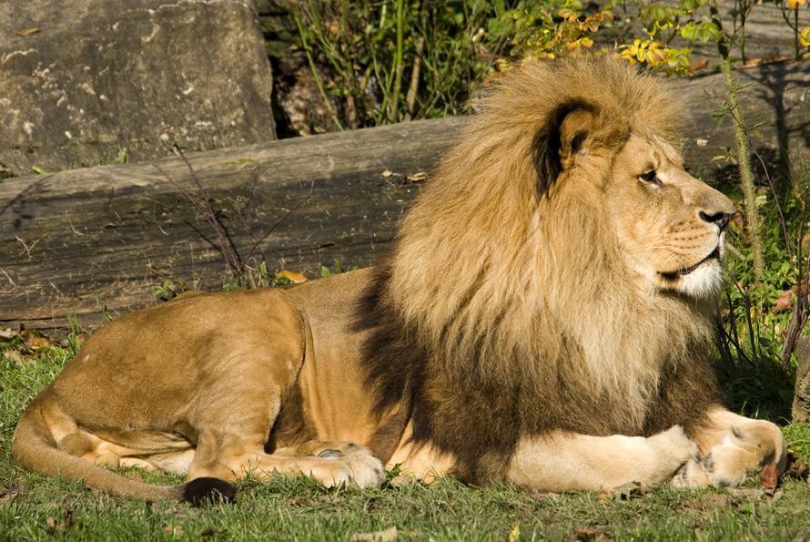 zoo-lesna2010-10-28_275-2