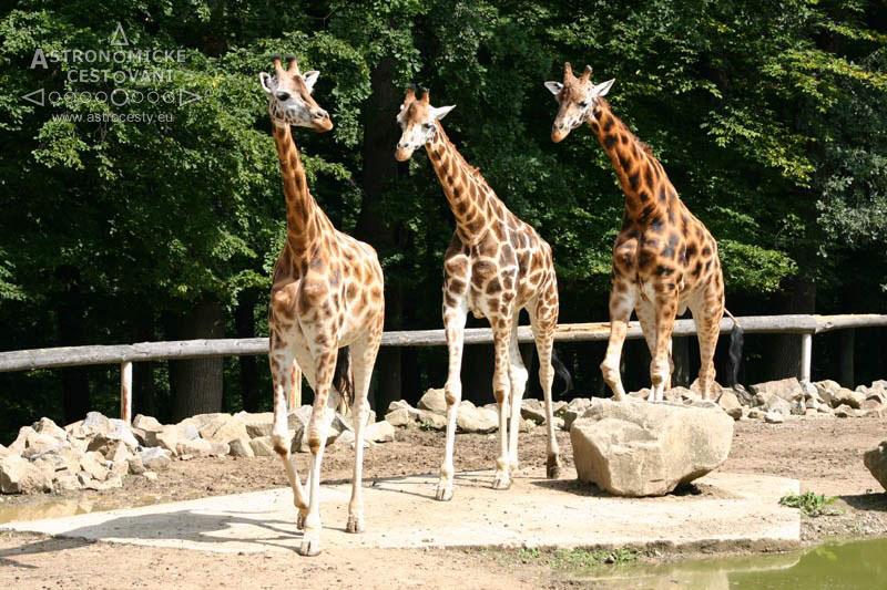 p-zoo-lesna-09-1297888846-2