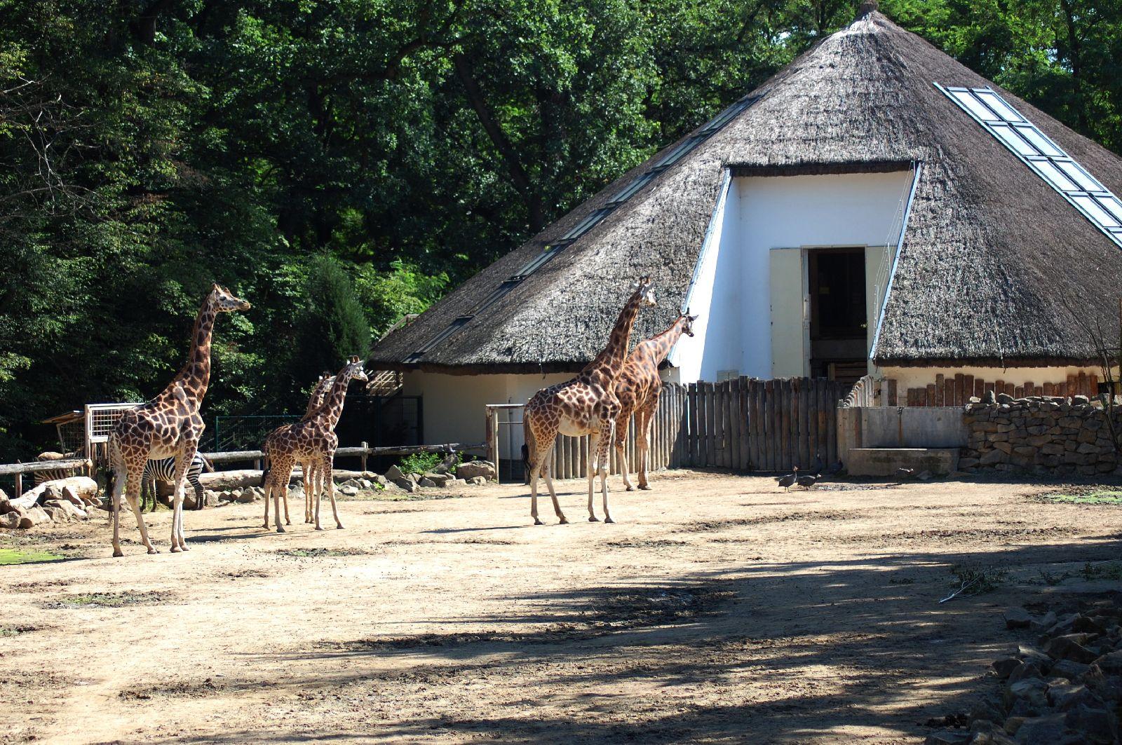 zoo-lesna-zlin-986-2