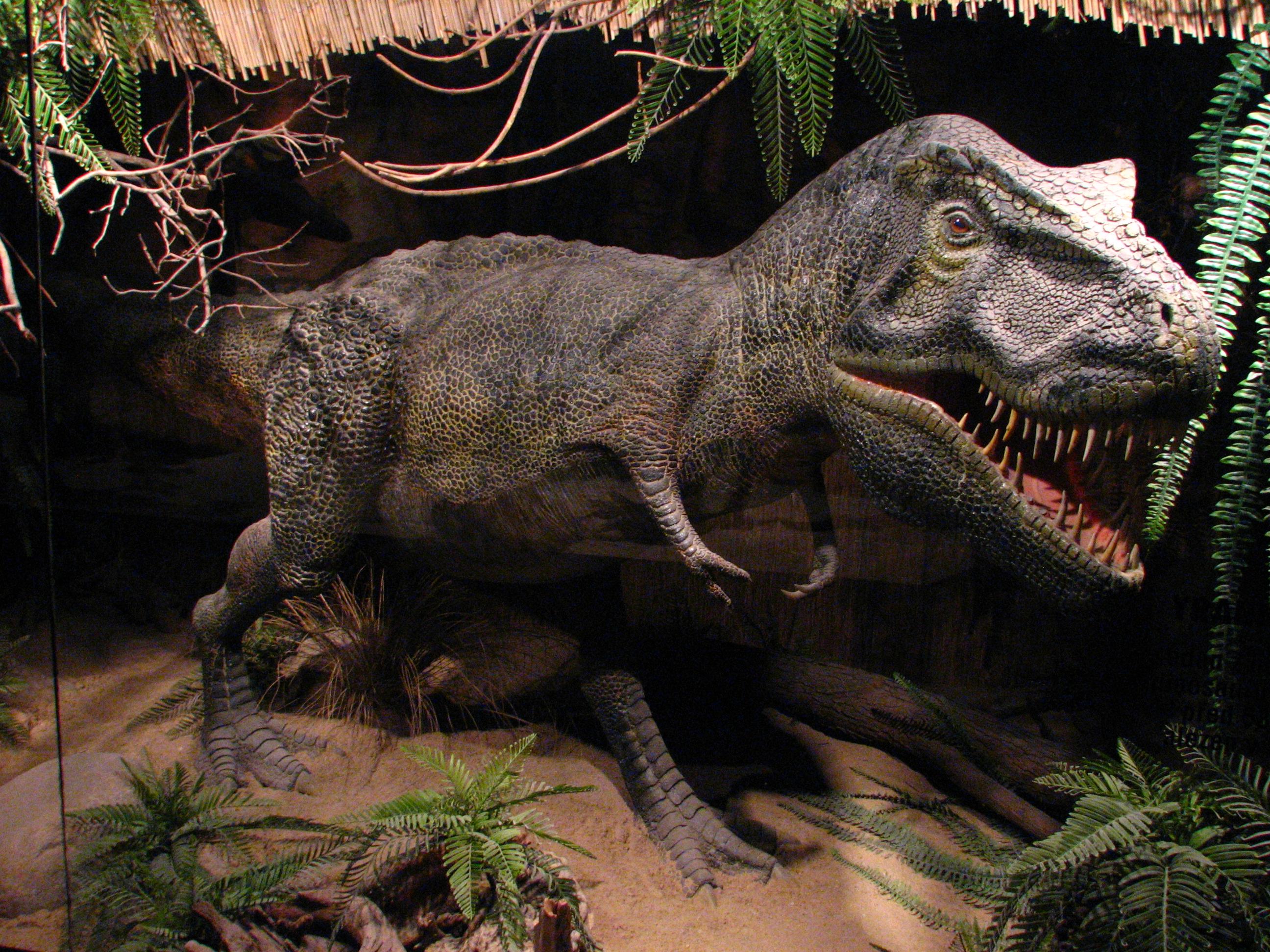 tyrannosaurus-01-zoo-dvur-kralove-2