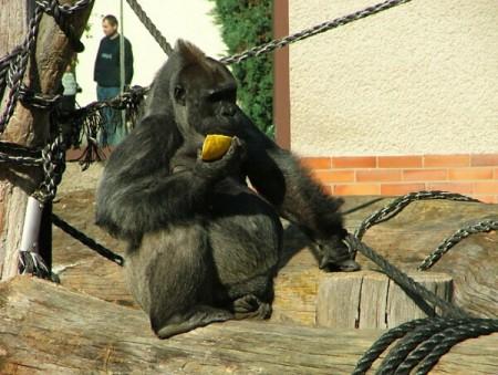 zoo-dvur-kralove-hradec-kralove-vychodni-cechy15-2
