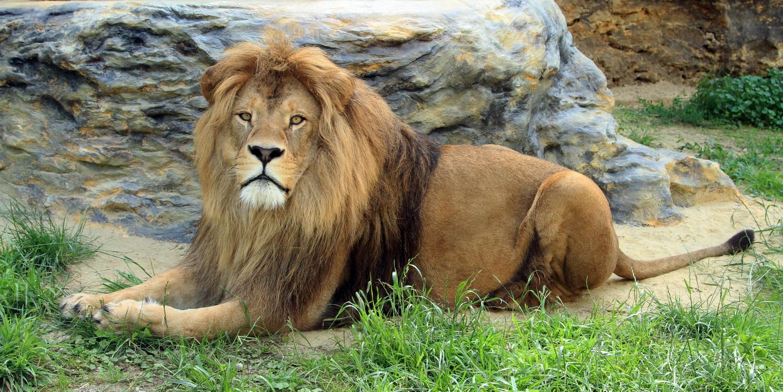 aslan-zoo-bojnice-2